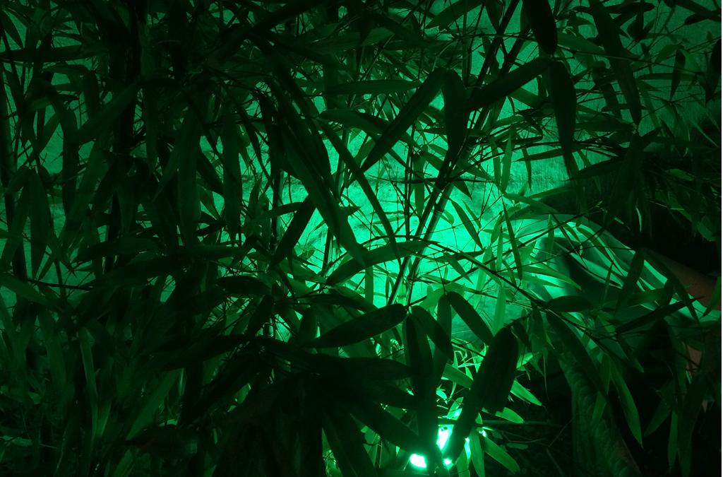 Exposición Verde de Christian Lagata Chroma en Centro Parraga